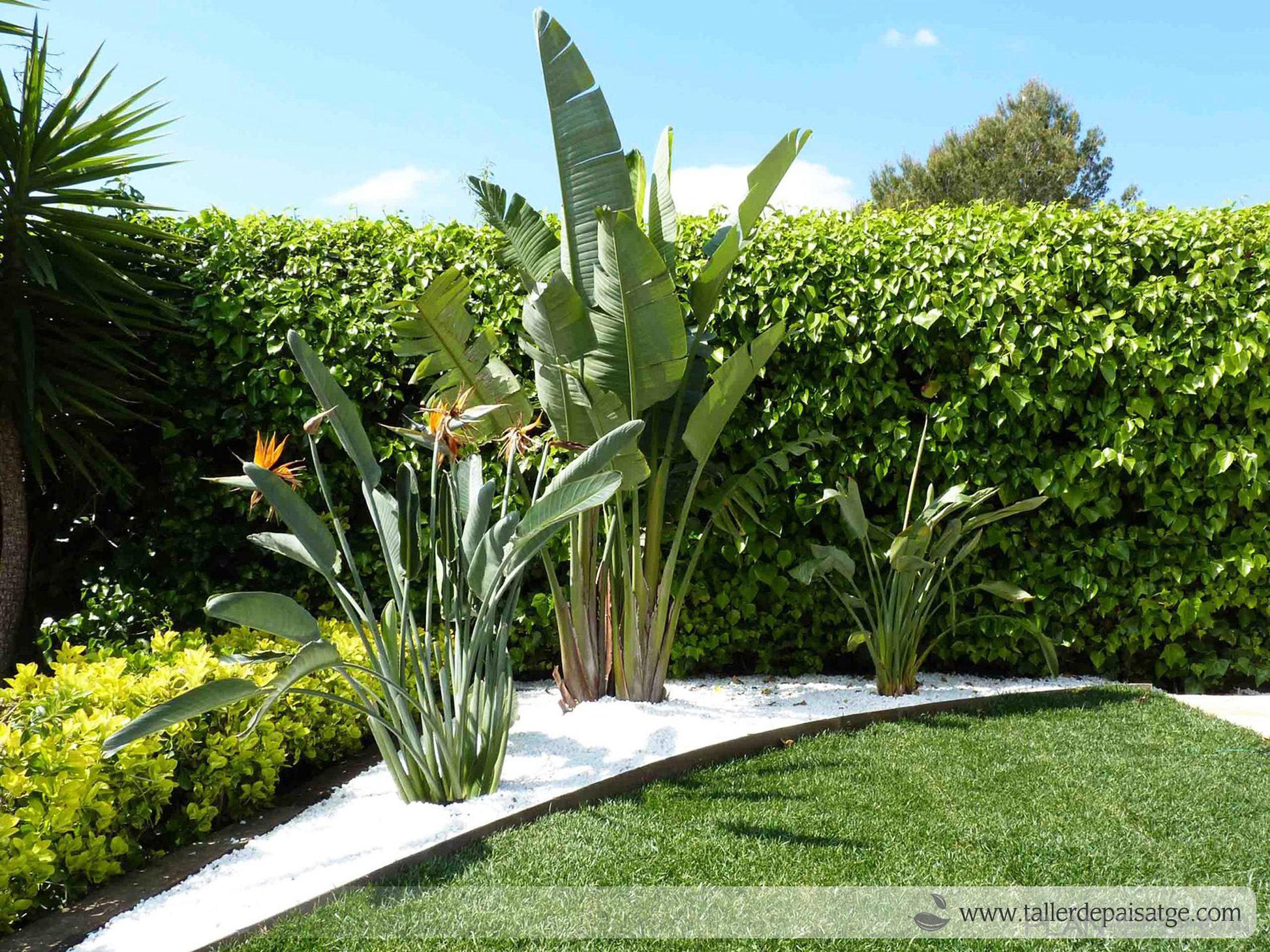 Piscina exterior jardin estilo tropical color verde for Paisajismo jardines con piscina