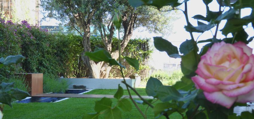 Terraza, Exterior, Jardin style contemporaneo color verde, rosa, gris  diseñado por Eva Vidal Mateu - Taller de Paisatge | Paisajista