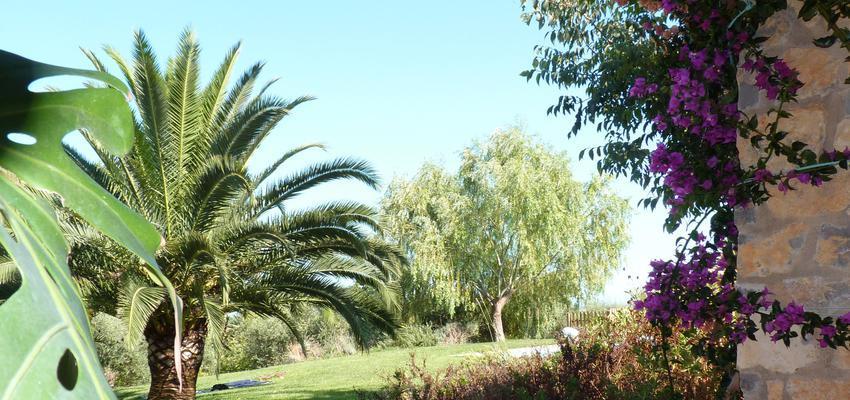 Porche, Exterior, Jardin style mediterraneo color verde, rosa, marron  diseñado por Eva Vidal Mateu - Taller de Paisatge | Paisajista
